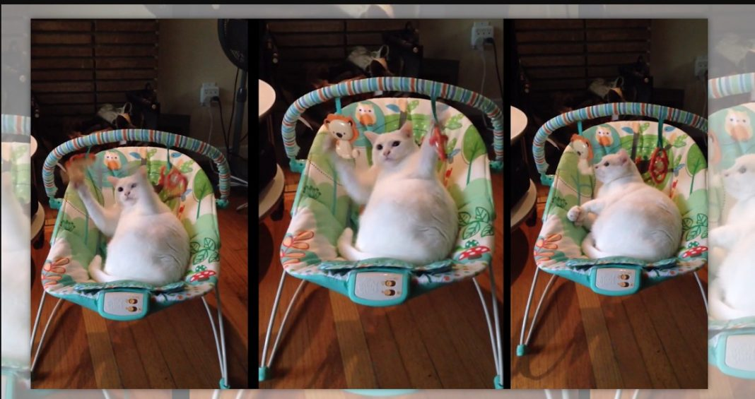 How do you keep your cat out of your baby swing