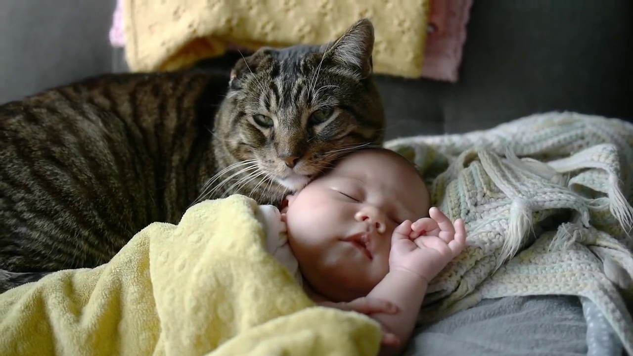 Do You Want Stop Cat From the baby's crib or the whole Room